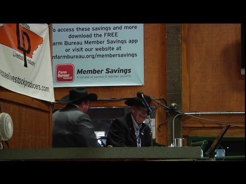 2017 Mule Day Auctioneer's Contest