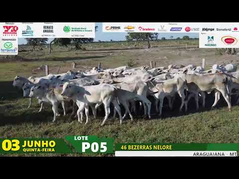LOTE P05