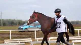 Тизер к Международным соревнованиям по дистанционным конным пробегам памяти Тимура Насырова