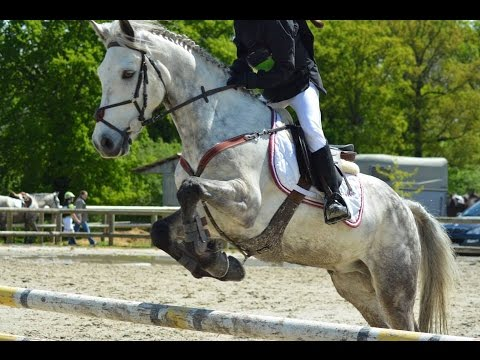Cce saut d 39 obstacles zo pr sente royal dol de bretagne en club 3 youtube - Frison saut d obstacle ...