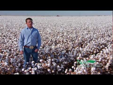NutriScription: Cotton Producers in the South Plains of Texa