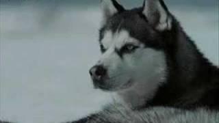 Майя и Макс.собаки из фильма Белый плен