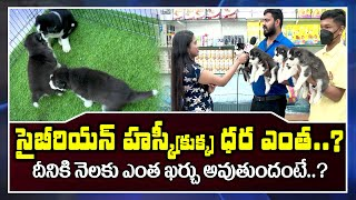 Must Watch: Siberian Husky Dog Complete Information Include Monthly Expenditure | SumanTV