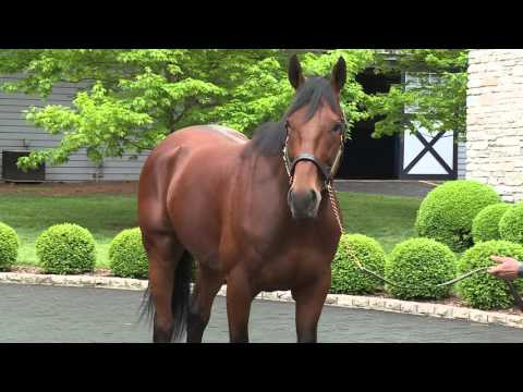 American Pharoah is living the stud life
