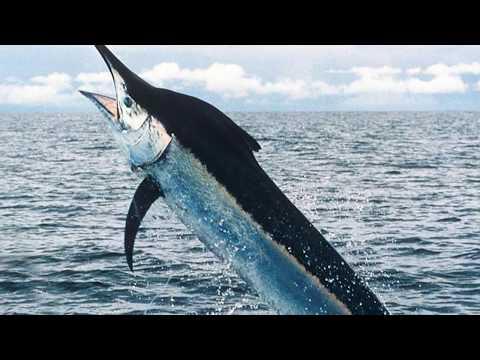 Интересные факты - Рыбы