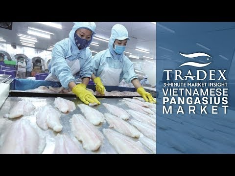 3MMI - What Happened To The Pangasius Market? How To Buy Pangasius