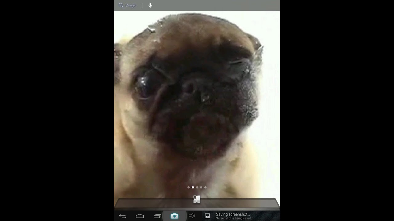 Dog Screen Cleaner Live Wallpaper