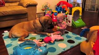 Cane Corso Mastiff Dog & Baby Playing Learning To Share Cheerio's