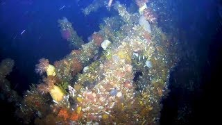 Divers Discover Lost WWII Ship 75 Years After Sinking