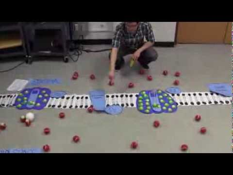 Photosynthesis Video 3/3: Cyclic Electron Flow