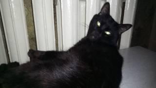 Кот очень любит тепло...