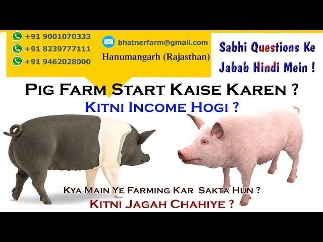 Pig Farm Start Kaise Karen ? ||  Kitni Income Hogi ? || Kitni Jagah Chahiye ll Swastik Pig Farm