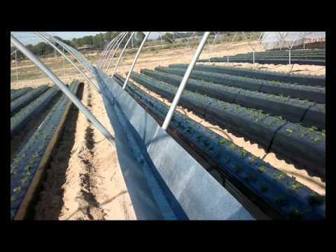 Sistema de recogida de agua de lluvia en los campos de - Recoger agua lluvia ...