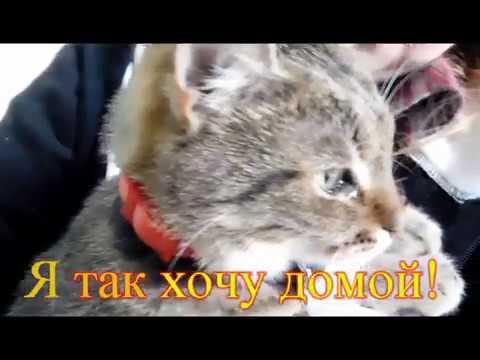 Им очень нужен хозяин.Кошкин дом29/06/2017
