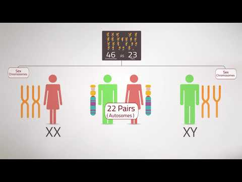 Everything You Need To Know:Chromosome Analysis (Karyotyping)