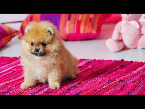 Funny Dog Videos 🐶 Puppies With Hiccups ~ Try Not to Laugh