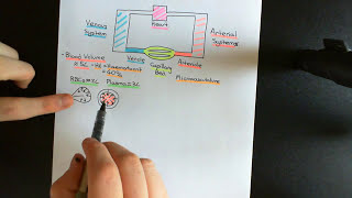 Control of Blood Pressure and Blood Volume Part 1