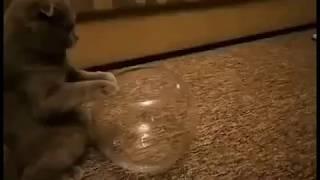 Ещё одно доказательство того что коты - это вода