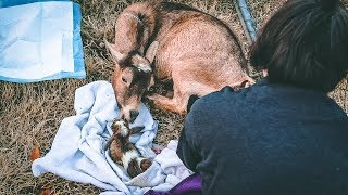I can't feel the Baby Goat's legs.