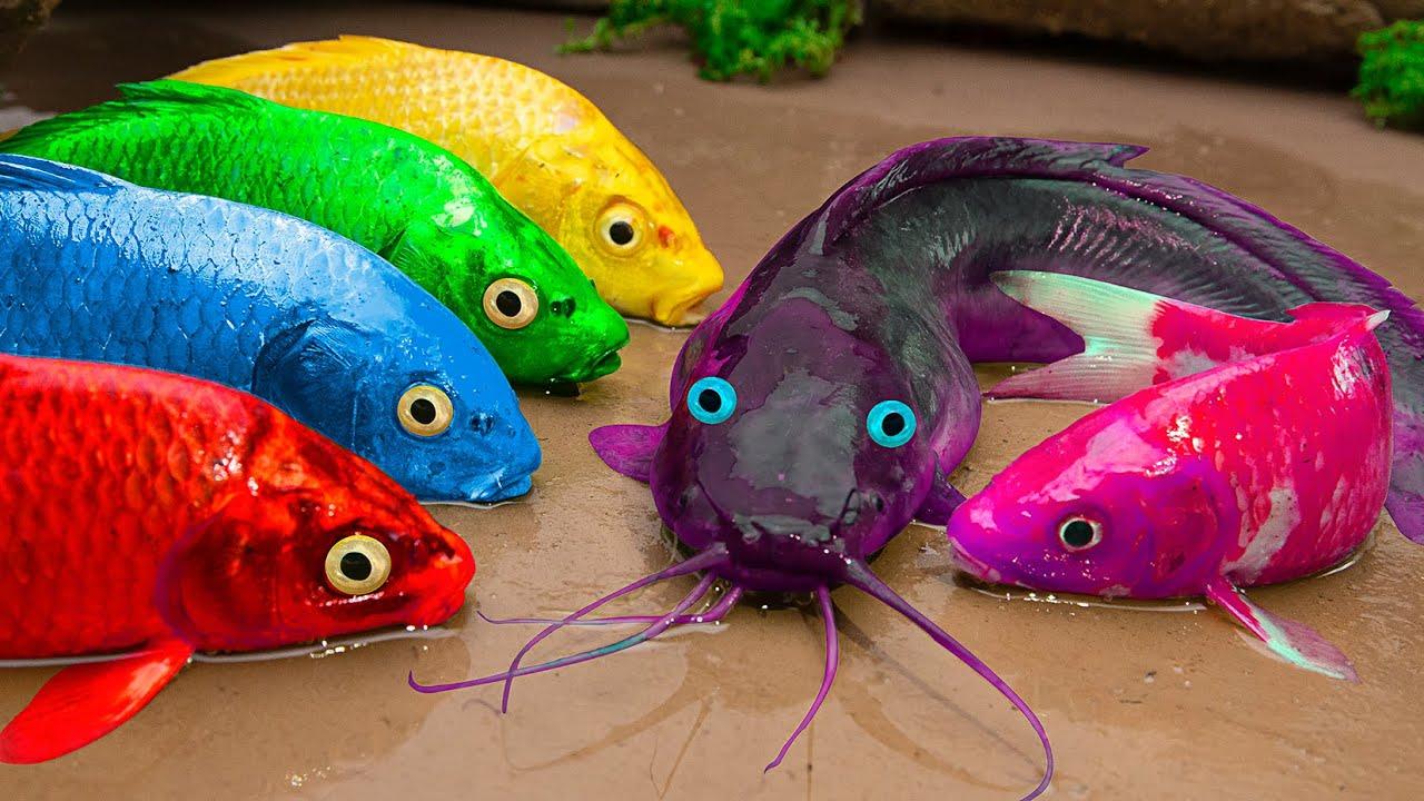 Stop Motion Asmr  Amazing Yellow Carp, Catfish, Octopus And Motorbikes - Primitive Cooking - Coco