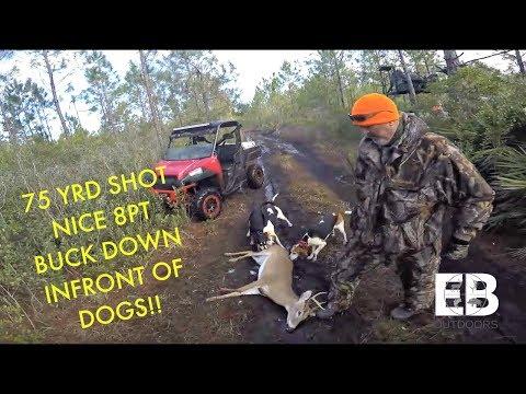 Deer Dog Drive (Big 8 Point Buck)