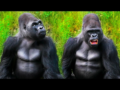 Beautiful Gorilla  and another animals VIDEO FOR KIDS