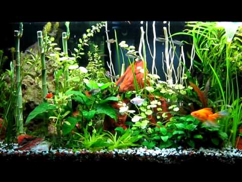 Mi acuario comunitario youtube for Acuario comunitario