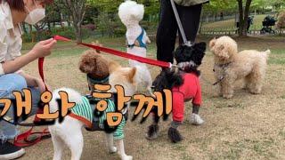 즐거운 강아지들의 피크닉. 큰 호두 생일파티까지