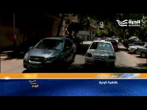 نبض المونديال في تاكسي القاهرة  - نشر قبل 7 ساعة