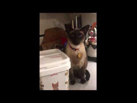 Royal Canin Feline Diet | Testimonial
