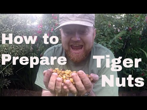 Cooking Particles #1 Tiger Nuts