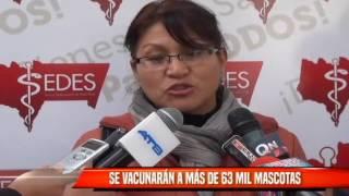 SE VACUNARÁN A MÁS DE 63 MIL MASCOTAS