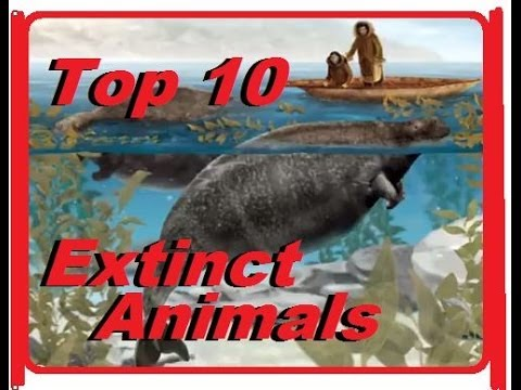 top 10 endangered animal species in Every year, new animals populate the endangered species list in honor of endangered species day on may 16th, we recognize this year's list and hope for a future for each of them.