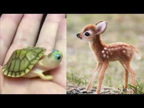 Cute baby animals Videos Compilation cute moment of the anim