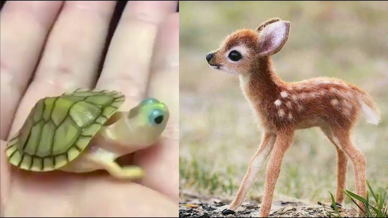 Cute baby animals Videos Compilation cute moment of the ...