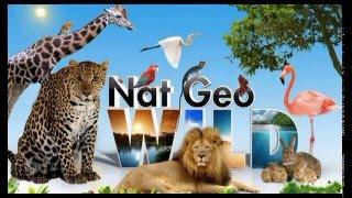 Дикие животные на Английском языке для детей. Wild animals