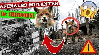 ANIMALES MUTANTES🐕☣️ de CHERNOBYL⚠️ afectados por la PLANTA NUCLEAR☢️...