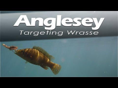 Wrasse Fishing - Holyhead, Anglesey, North Wales.