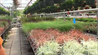 Rice Road Greenhouses Tour: May 2012