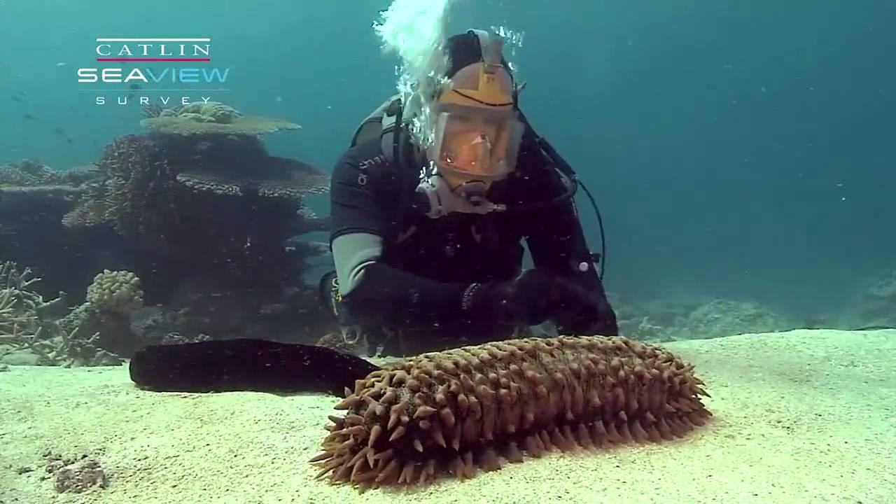 Pepino de mar - YouTube