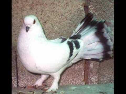 taklacı kuşlar için bana ulaşın