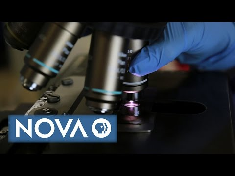 What Makes Science True? | NOVA