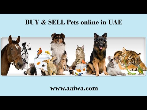 Aaiwa.com - Buy and Sell Pets in UAE - Post Free ads for Pets in Dubai, UAE