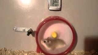 Прикол))Турбо хомяк-в колесе