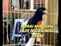Wajib Di Coba Murai Batu Jadi Cepat Gacor Dan Bermental Juara  Mp3 - Mp4 Download
