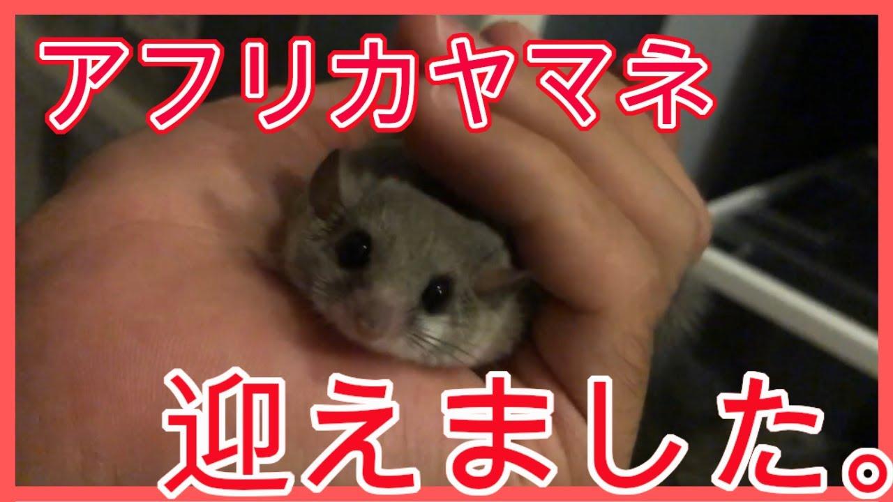な つく 小動物 種類でさがす(小動物) ペットショップのコジマ