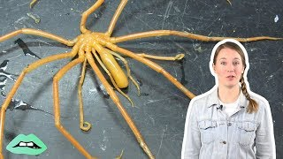 Surprising Facts About Sea Spiders