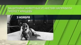 3 ноября — Совершен запуск космического аппарата с собакой Лайкой на борту