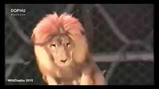 Animal vs Human , Amazing part (3) +18 هجوم الحيوانات على الانسان فيديو رائع
