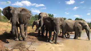 A Day at the Beach for the Elephants & Khanyisa's Unique Trunk Splashes